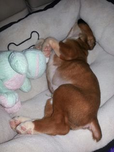 Just a worn out pup and his frog!