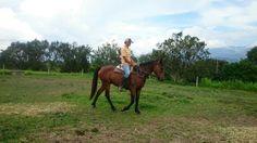 Egipto ya en el campo Horses, Natural, Animals, Egypt, Country, Animales, Animaux, Horse, Animal