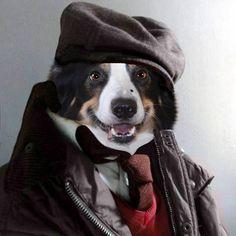 Tá frio pra cachorro!