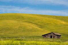 """""""Abandoned Homestead in Washington State"""" - by stevewhis on Flickr.  (Farm country in the Palouse region of Southeast Washington.)"""