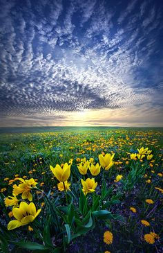 Spring Fever by Phil Koch on 500px