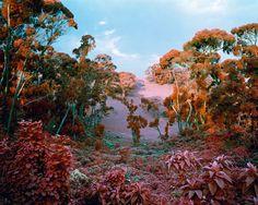 Le Congo en infrarouge congo infrarouge 06 photographie bonus art