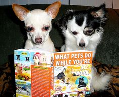 Chic and Pinta both have a photograph in this new book. Called What Pets Do While You're at Work. A Humorous collection of Photos of what you're pets are up to while you are at work. By Jason Bergund and Bev West.  Hee, hee, looks like they are getti more about this at cool news site 1