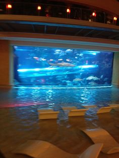 Shark tank/water slide at the Golden Nugget.