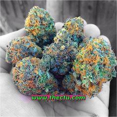 www.cannabistraininguniversity.com www.facebook.com/thectu www.instagram.com/cannacollege www.twitter.com/cannabistu www.pinterest.com/cannabisschool www.youtube.com/cannabistraininguniv