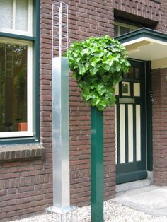 The evergreen Hedera, one of the most suitable Climbing plant to apply in the innovative growth system from Hivy Pillar Greenfashion. (made in Holland) www.hivypillar.nl