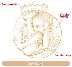 31 Weken zwanger   Alles over de 31e week van je zwangerschap! 31 Weken zwanger   Alles over de 31e week van je zwangerschap! #zwanger_week_31 #zwangerschap_week_31 #31_weken_zwanger #31e_week_van_de_zwangerschap