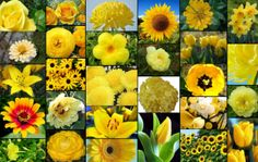 TYPES OF YELLOW FLOWERS - Google Search