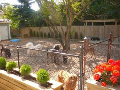 Veterinary Pet Health Care : 8 Droolworthy Dog Friendly Backyards