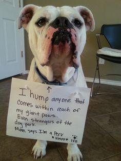 Dog Park Humping Neuter