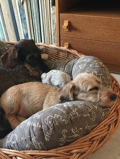 Daschund, Laundry Basket, Wicker, Dogs, Gifts, Animals, Home Decor, Presents, Animales