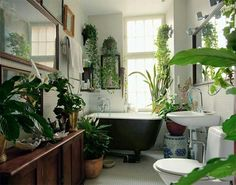 50 Trending 2018 Jungle Bathroom Design - Home Design Hanging Plants, Indoor Plants, Hanging Gardens, Indoor Gardening, Jungle Bathroom, Jungle Room, Interior Exterior, Interior Design, Interior Ideas