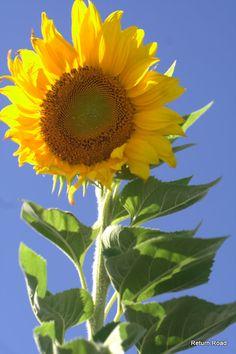 Sunny Day esta es una bella imagen que mucho gustara a @Tutu Domínguez, feliz noche