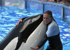 """On February a tragedy happened at SeaWorld Orlando in Florida. One of the parks senior Killer Whale trainers, Dawn Brancheau, was killed during a routine """"Dine With Shamu"""". Seaworld Orlando, Orcas Seaworld, Dolphin Family, Save The Whales, Marine Aquarium, Wale, Young Animal, Marine Biology, Killer Whales"""