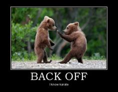 Bears sparring: Back off...I know karate!