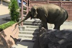 Elephant Uses Trunk as Leaf Blower