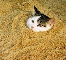 Don't Flush Kitty Litter Down the Toilet - PetStreetMall Articles