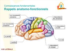 Memoire Online - La prise en charge des hémiplégies consécutive a l'oedeme cérébral - Paul Ukondayanga udilamfumu
