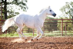 Fiesta Gotta Gun ~ American Quarter Horse Stallion