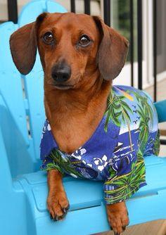 .Love the Hawaii theme. doxie