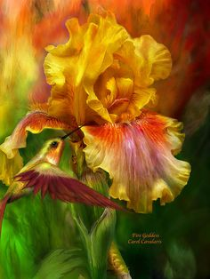 Iris - Fire Goddess by Carol Cavalaris. Prints available at Fine Art America. You rise from the winter coldness A flame whose birth has come Reaching like a Fire Goddess Toward the sun.  Fire Goddess prose by Carol Cavalaris  This painting of a yellow and orange bearded iris with a matching hummingbird is from the 'Language Of Flowers' collection of floral art by Carol Cavalaris.