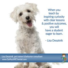 quote about pets, dog training and teaching by Cincinnati dog trainer Lisa Desatnik