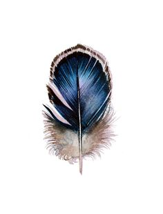 Mystery Feather  Original Watercolor Feather Painting by jodyvanB, $45.00