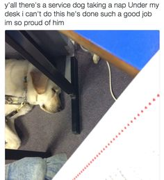 And this one who could barely stay awake for any classes at all. | 17 Photos That Prove The World Simply Isn't Worthy Of Service Dogs