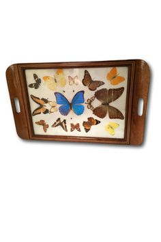 Encased in a vintage inlaid wood tray these fifteen butterflies and the small iridescent green beetle are mounted are pressed under the glass and backed with a plush fiberfill that gives it a slight science class feel. SHOP http://www.heathertique.com/products/15-real-butterfly-specimen-wood-tray-vintage-collection-wall-art-last-minute-gift-quick-shipping | Vintage Home Decor Accents