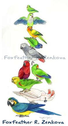Parrot Stack Painting Print  Wall art bird stack door foxfeather