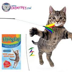 http://www.catmypet.com/flying-cat