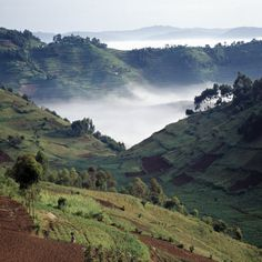 Mist in the valley, Southwest Uganda            http://www.allposters.com/-sp/Mist-Hugs-the-Bottom-of-Valley-in-Early-Morning-in-Beautiful-Hill-Country-of-Southwest-Uganda-Posters_i6219608_.htm