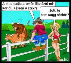 Family Guy, Jokes, Baseball Cards, Guys, Comics, Funny, Budapest Hungary, Fictional Characters, Projects