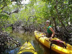 kayak through the everglades Kayak Camping, Canoe And Kayak, Kayak Fishing, Miss Florida, Kayaking Tips, Kayak Adventures, Thousand Islands, I Love The Beach, Up Book