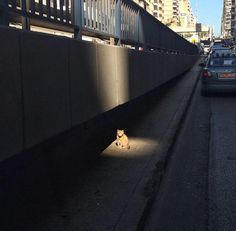 """Imgur: """"If video games have taught me anything, this cat has a side quest to offer me."""""""