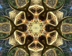Kaleidoscope effect added to a photo I took of a Texas Longhorn in Palo Duro Canyon State Park.