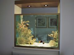 Awesome in the wall fish tank... Want to do this in the living room area