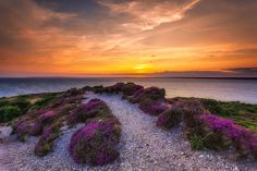 Purple Heather Photograph - Sunset Trail by English Landscapes