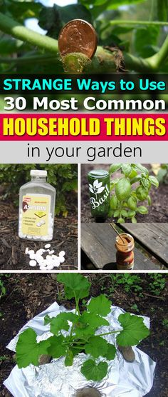 Learn about the 30 Most Common Household Things that can make your garden better and gardening easier.