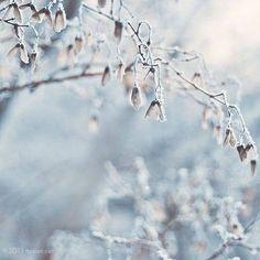 White Christmas ❉