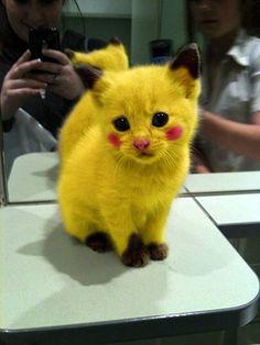 Pokemon Pikachu Kitty @Siobhan Barrett this made me think of you :D