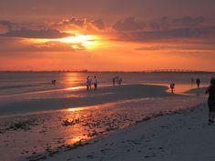 Search Engine Optimization in Ft Myers Florida Vacation Destinations, Dream Vacations, Vacation Ideas, Sanibel Island, Island Beach, Beach Resorts, Hotels And Resorts, Estero Beach, Estero Island