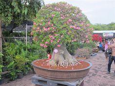 Image from http://www.oknation.net/blog/home/user_data/file_data/201212/03/51591d9fa.jpg.