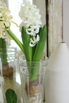 Masaki's diary Feb 2014 S Diary, Vegetables, Flowers, Vegetable Recipes, Royal Icing Flowers, Flower, Florals, Veggies, Floral