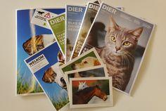 Steun de Dierenbescherming met een lidmaatschap of gift. - Dierenbescherming.nl