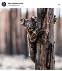 Beautiful Creatures, Animals Beautiful, Tasmania, Kangaroo Island, Quokka, Wild Fire, Super Cute Animals, Powerful Images, Wombat
