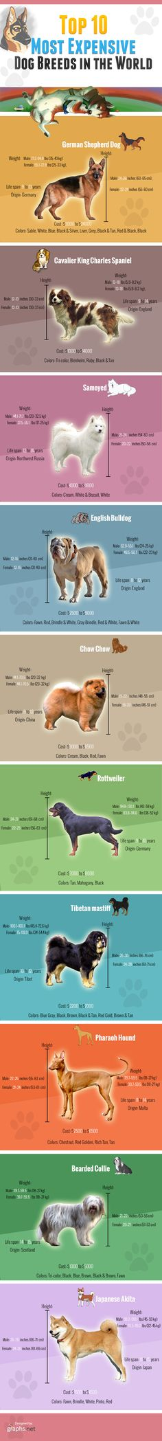 Top 10 Most Expensive Dog Breeds in the World Infographic