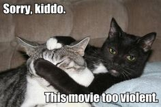 Funny Cat Pictures With Captions | Funny Pictures of Cats With Captions-cats watching movie