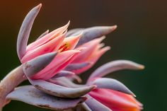 21 Tips for Creative Flower Photography - Improve Photography