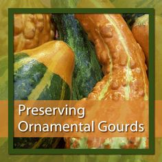 Make fall decorations last with tips on preserving ornamental gourds.